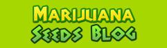 web-banner-design-header_ws_1397667546