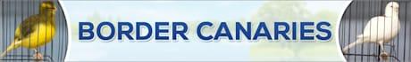 banner-ads_ws_1451024034