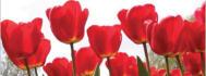 web-banner-design-header_ws_1405560970
