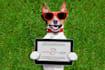 pet-modelling_ws_1456157343