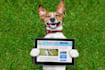 pet-modelling_ws_1456201355