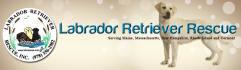web-banner-design-header_ws_1366319414