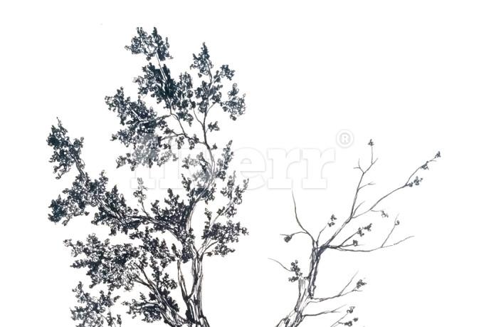 digital-illustration_ws_1450984792