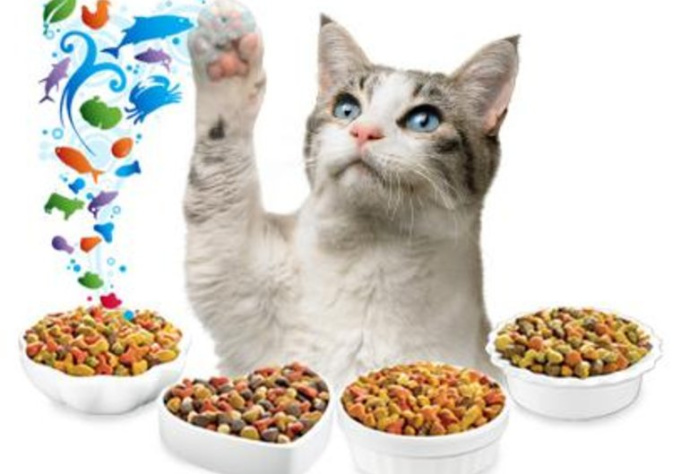 eat CAT food