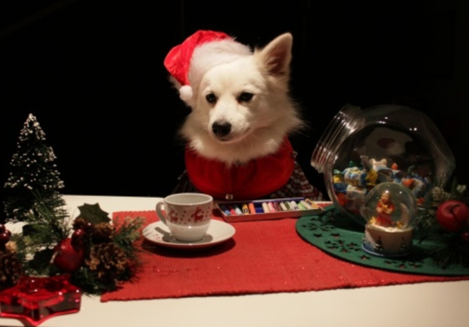 make a Christmas video with my dog Ozzy