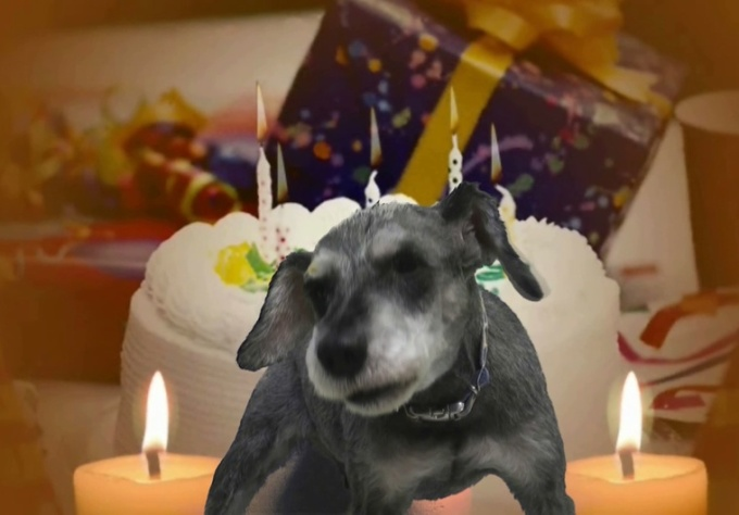 create a personalized video of my dog singing Happy Birthday to anyone you like