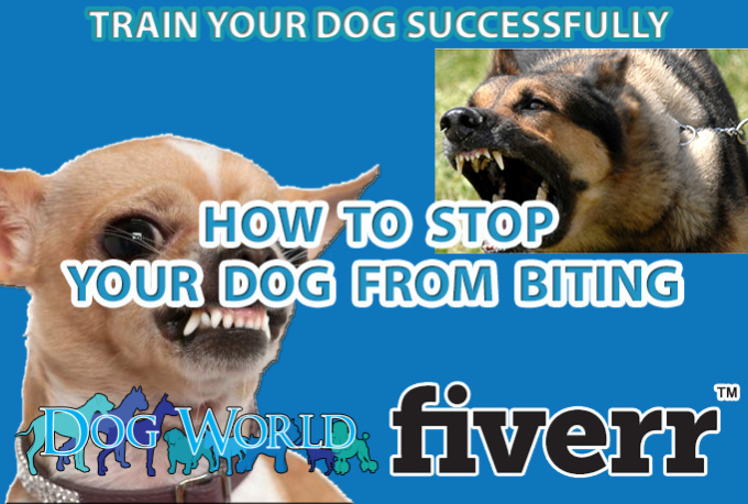 how to teach my dog to stop biting