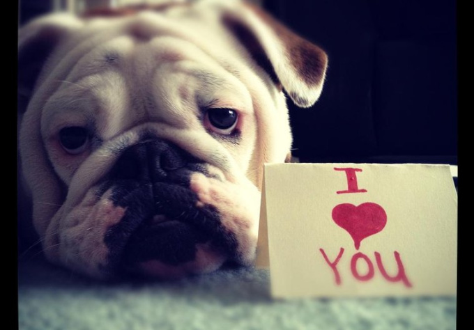 take a picture of my female bulldog with your message