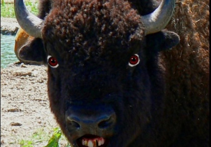 create an animated video of Bison the NO bull Messenger talking any message you want to rant and rage