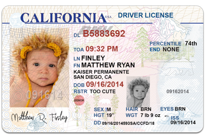 driving licence template photoshop