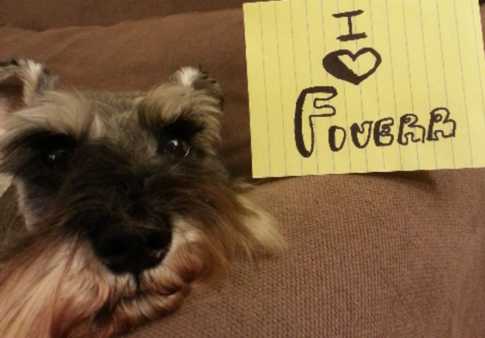 take picture of my pet schnauzers with your message