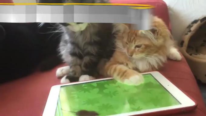 Cats-V1