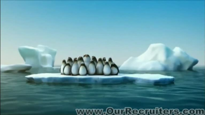 penguins recr