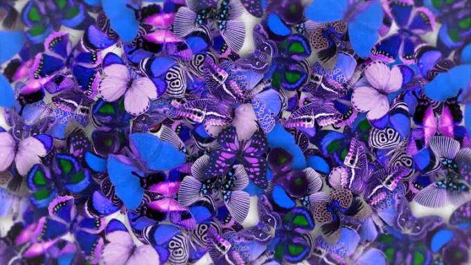 Butterfly_MC