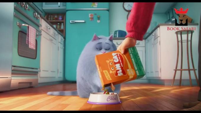 Cat - jsmida - booksafari - mp4