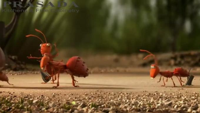 prasada ants
