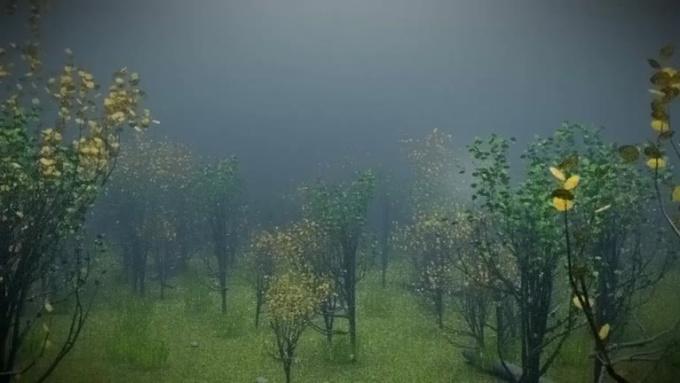 forestv4