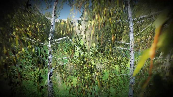 TREE_Film
