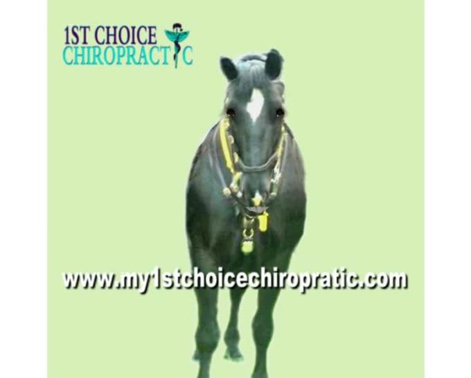 horse chiro 2 MP4