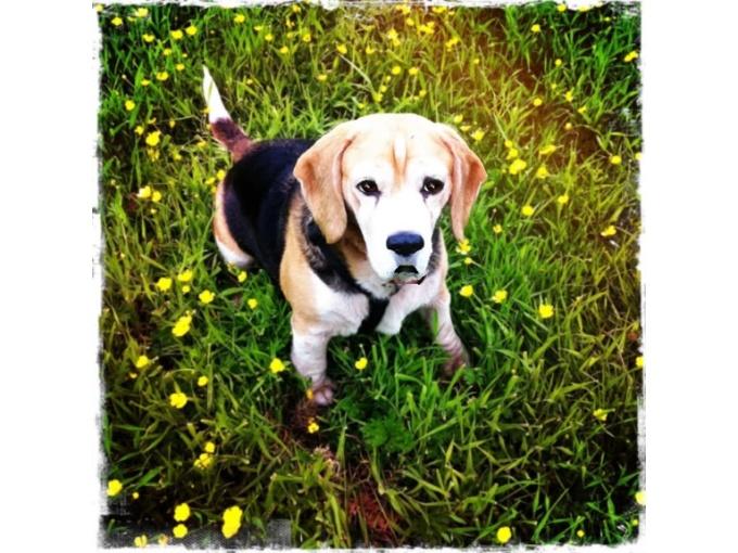 Flower dog WMV
