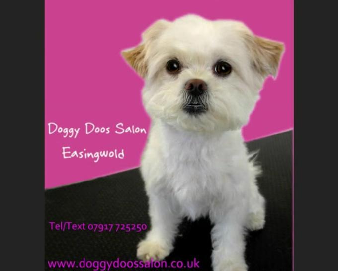 Doggy Doos Salon MP4