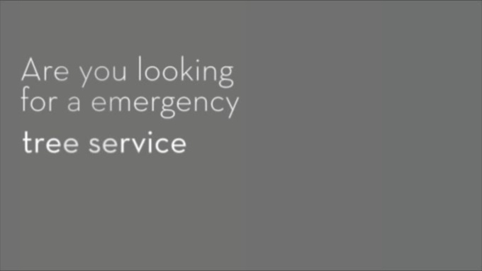 Boerne_Tree_Service_Pros__Emergency_Tree_Service_in_Boerne_Texas