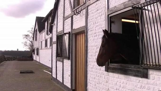Horse Video 9MB
