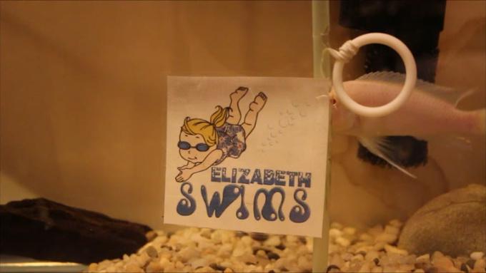 starhoop-elizabethswims
