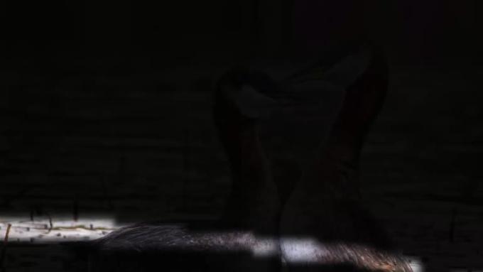 psycchic12_light photo logo reveal_op1_FULL HD_10 secs