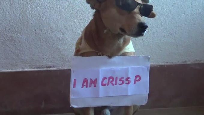 criss_p