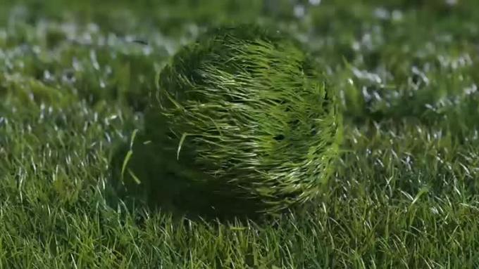 GRASSBALL-SWEET-REVISED