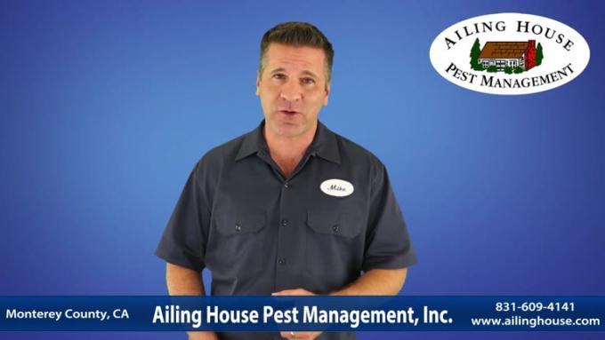 Pest Control Video 2