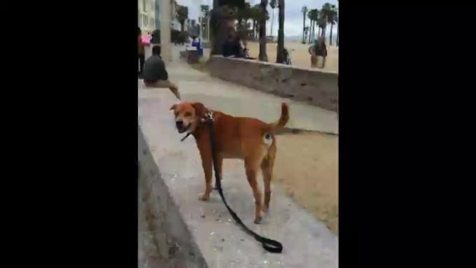 Massimo_Great_Dog_Great_Friend
