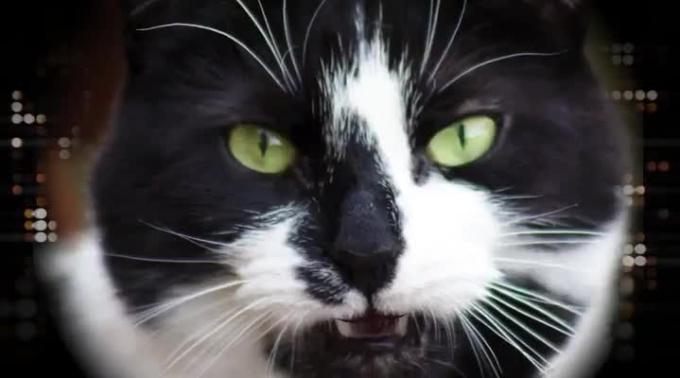catsHD_720p