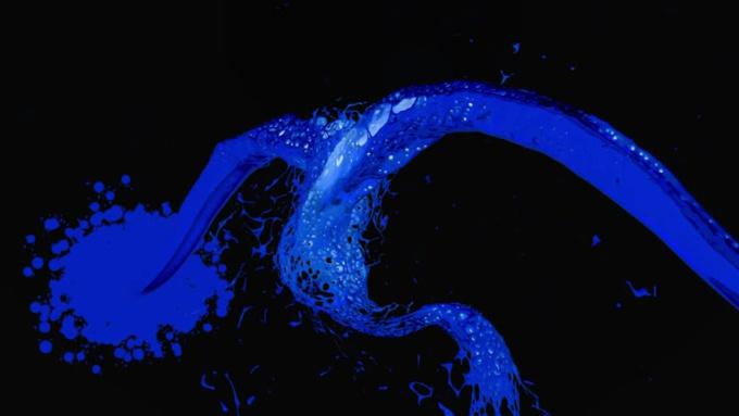 Great Blue paint