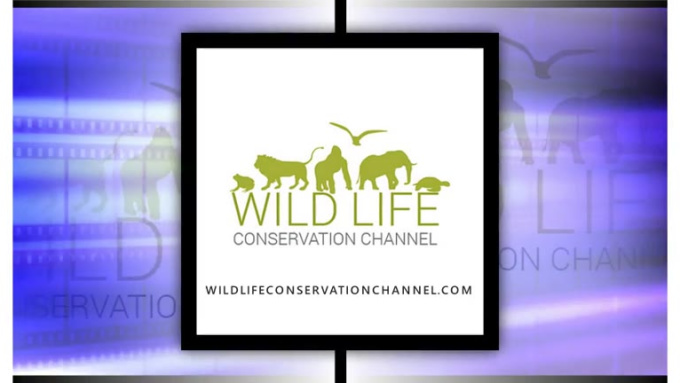 Wild Life Video Preview 4