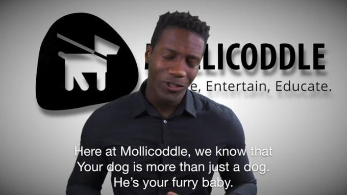 Mollicoddle - $50 Gift Card