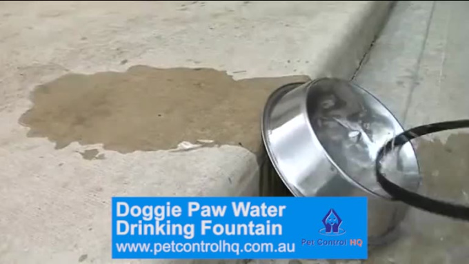 Doggie Paw Water Fountain