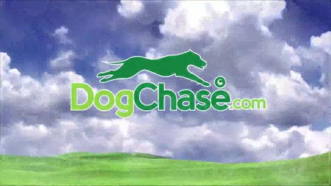 DogChase001