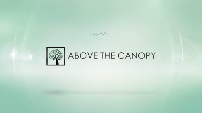 Above The Canopy Full HD 1920 x 1080p