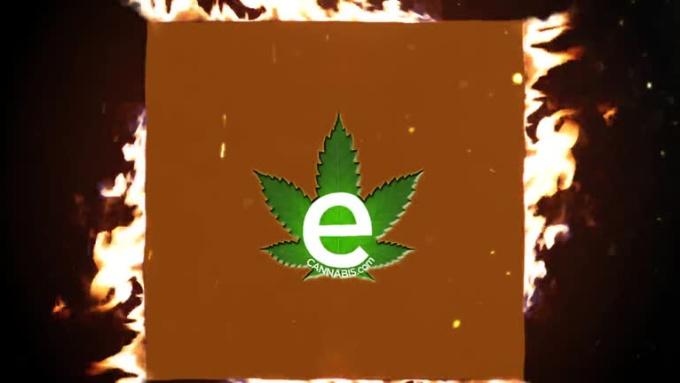 Cannabis_1_Stop_Shop