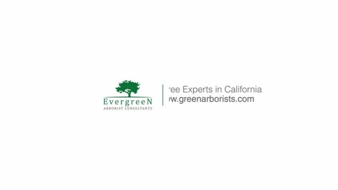 Evergreen logo FULL HD Express v2