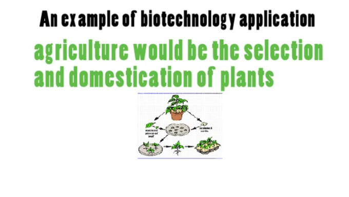Video_2_from Biology_Chapter_11