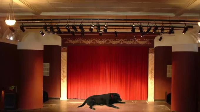 dogTheater