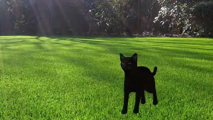 cat_run_study