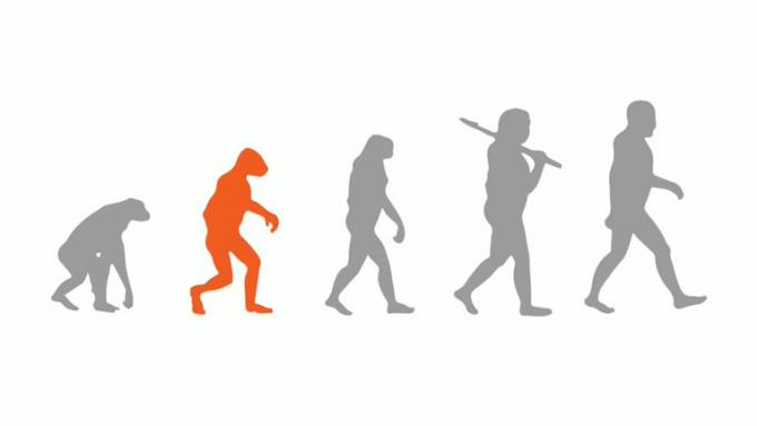 walk evolution