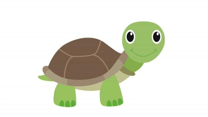 tortoise smiling facing camera