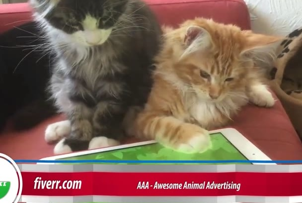 create an Awesome Funny Pets Advertising video