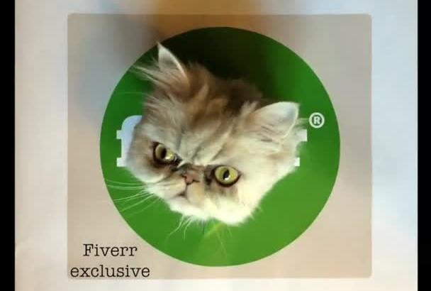 record my cute cat break through your company logo