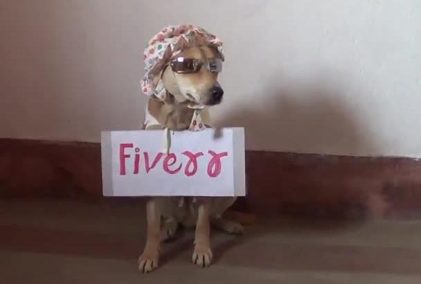display any message, website or blog on my dog SHERU